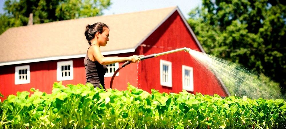 Organic Farms in Canada – How Does It Happen