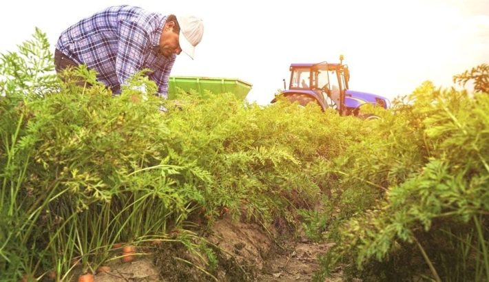 The top 5 organic farms in Canada