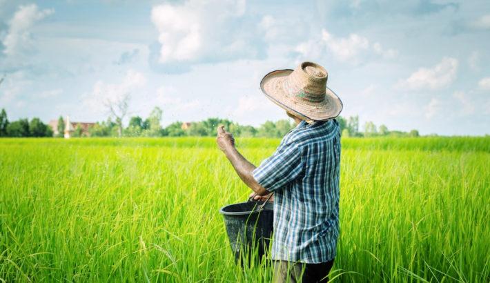 Collaborative regional alliances for farmer training