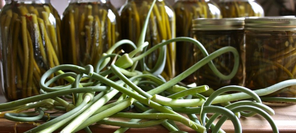 Pickled garlic scapes in jars and fresh garlic scapes