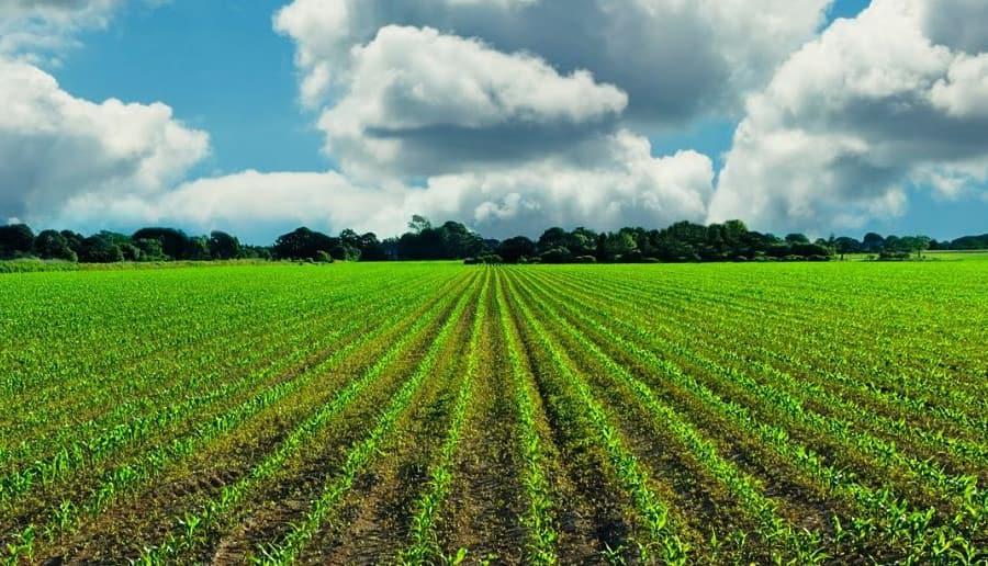 A seeded area of Canadian organic farm